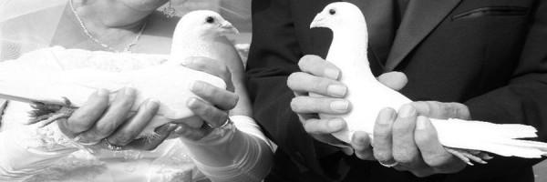 golubovi_na_vjencanju